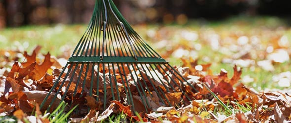 Leaf Collection Begins October 19th